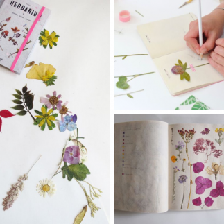 Grow Your Creativity with Herbariums and Pressed Flowers